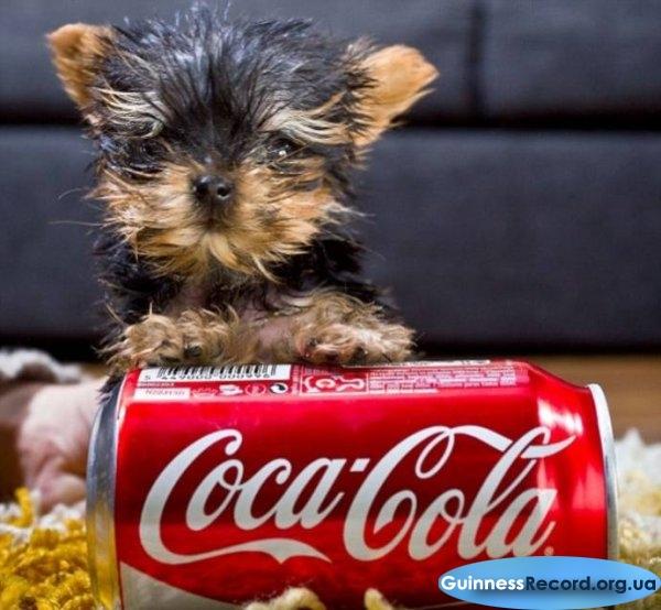Самая маленькая собака в мире 9 фото